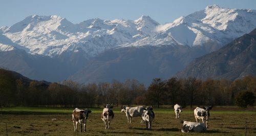 Team building Val di Susa: l'Orienteering